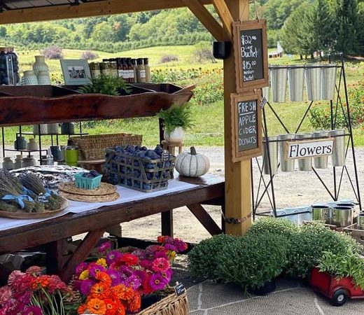 A pergola stocked with flowers, gifts and produce